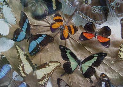 muzeum motyli2 WCZASYREMEDIOS ŁEBA (2)